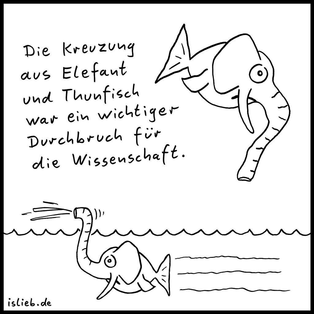 Durchbruch | Thunfisch-Cartoon | is lieb? | Die Kreuzung aus Elefant und Thunfisch war ein wichtiger Durchbruch für die Wissenschaft. | Fische, Elefanten, Wissenschaftler, Forschung, Genetik, Biologie, U-Boot, Uboot, Tunfisch