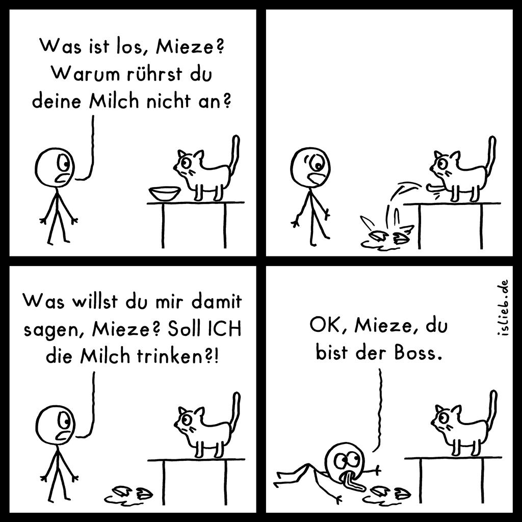 Mieze | Katzen-Comic | is lieb? | Was ist los, Mieze? Warum rührst du deine Milch nicht an? Was willst du mir damit sagen, Mieze? Soll ICH die Milch trinken?! OK, Mieze, du bist der Boss. | Katze, Kater, Haustiere, Okay
