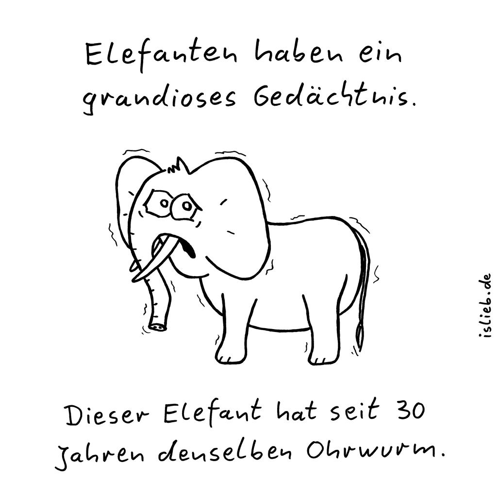Elefanten | Ohrwurm-Cartoon | is lieb? | Elefanten haben ein grandioses Gedächtnis. Dieser Elefant hat seit 30 Jahren denselben Ohrwurm. | Tinnitus, Hörsturz, Erinnerung