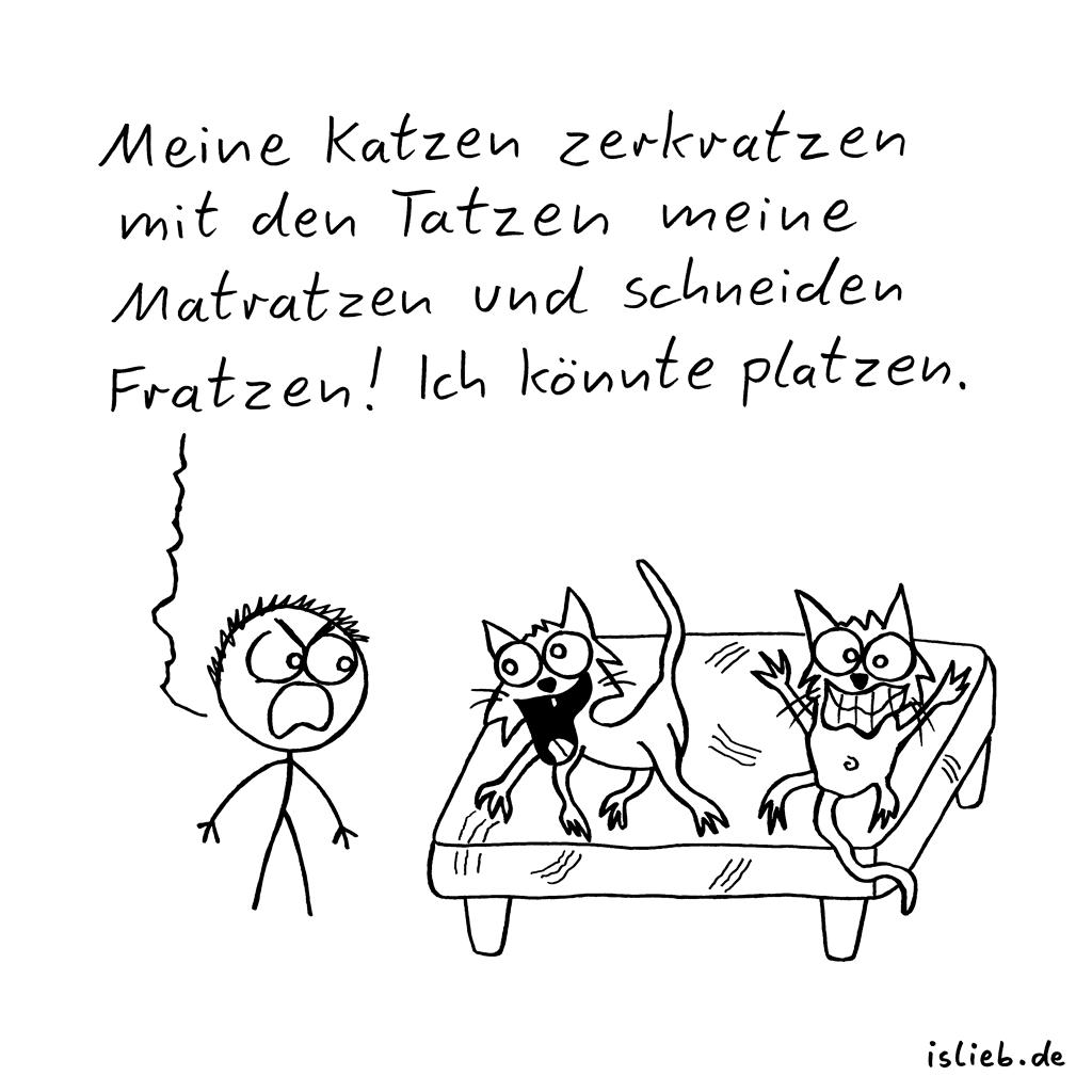 Verpatzen | Katzen-Cartoon | is lieb? | Meine Katzen zerkratzen mit den Tatzen meine Matratzen und schneiden Fratzen! Ich könnte platzen.