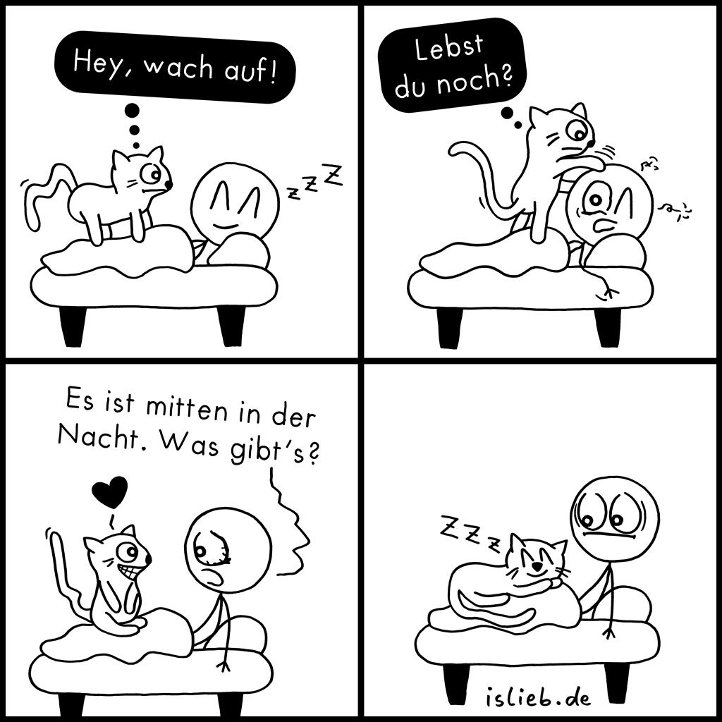Wach auf! | Katzen-Comic | is lieb?