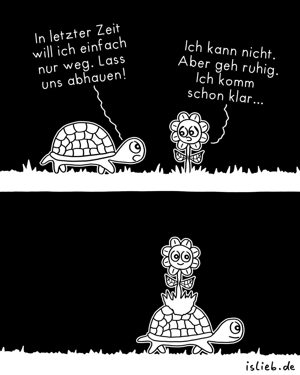 Abhauen | Schildkröten-Comics | is lieb?