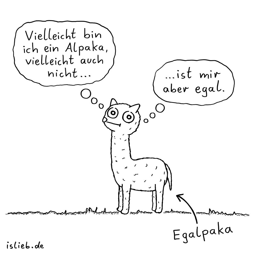 Vielleicht | Alpaka-Cartoon | is lieb?